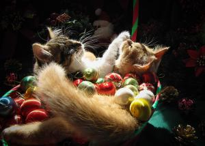 christmas-season-w-two-kittens-in-love--kitty-cat-angels-w-heads-up-nestled-in-a-basket-of-baubles-chantal-photopix